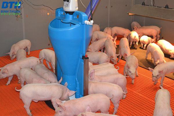 Tấm sàn nhựa lợn con cao cấp